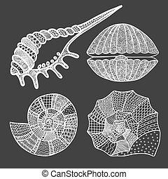 Set of seashells and starfish