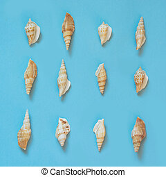 Set of seashells on pastel blue. Summer vacation concept. Top view.