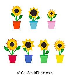 Set of seven sunflowers in flowerpots. Flat vector illustration on white background.