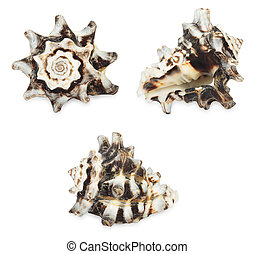 Set of shell. All in focus. High res. Isolated on a white background