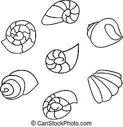 Set of shell vector on white background