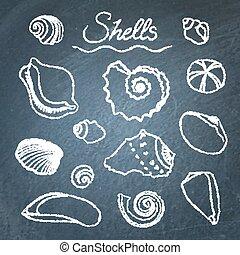 Set of shells on chalkboard
