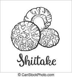 Set of shiitake edible mushrooms sketch style vector...