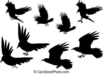 Set of silhouette flying raven bird with leg