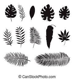 Set of silhouette of tropical leaf, isolated on white