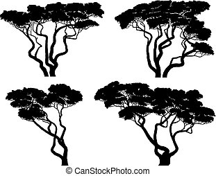 Set of silhouettes of African acacia trees. - Set of vector...