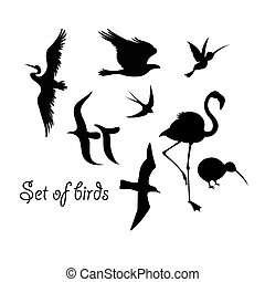 Set of silhouettes of birds symbols