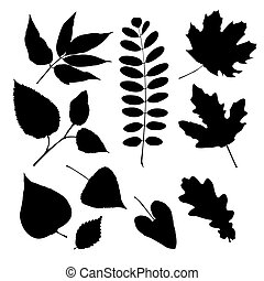 Set of silhouettes of different leaves - Set of silhouettes...