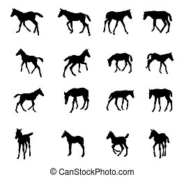Set of silhouettes of foals
