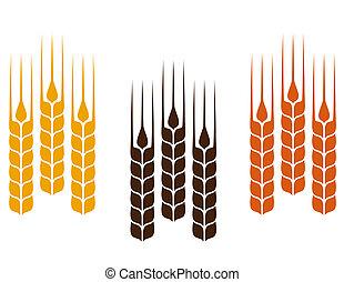 colorful wheat ears