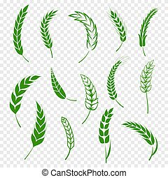 Set of simple green wheats ears icons and wheat design elements for beer, organic or local farm fresh food, bakery themed wheat design, grain, beer elements, rye simple. Vector illustration eps10