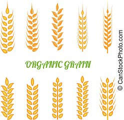 Set of simple wheats ears icons and wheat design elements for beer, organic wheats local farm fresh food, bakery themed wheat design, grain, beer elements, wheat simple.