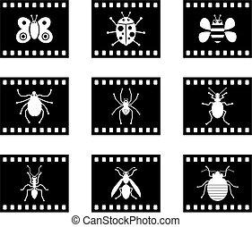 bug film