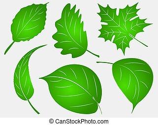 Set of six green leafs