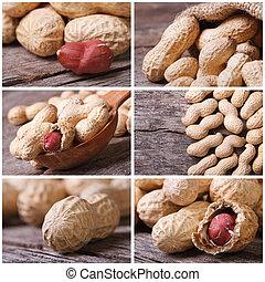 set of six peanut close-up photo