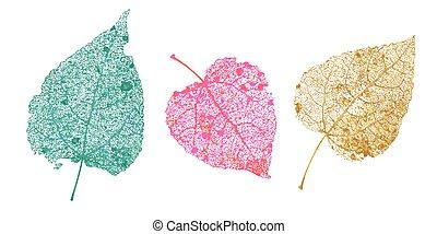 Set of skeletons leaves. Fallen foliage for autumn designs. Natural leaf of aspen and birch. Colored Vector illustration