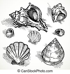 Set of sketches different shapes shell 2