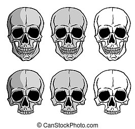 Set of Skulls isolated on white