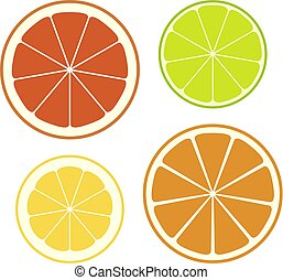Set of slices of different citrus fruits. Vector Illustration.