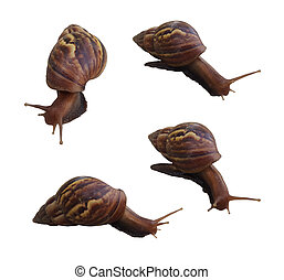 set of snail isolated on white background