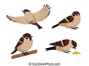Set of sparrow birds icons