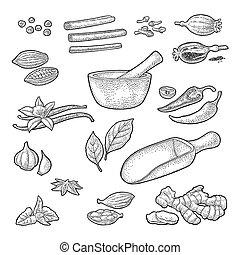 Set of Spices, Mortar and Pestle.. Vintage vector engraved illustration.