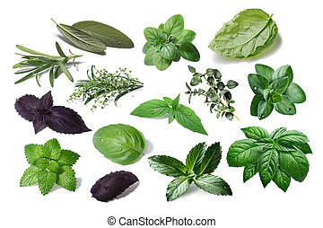 Set of spicy herbs