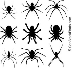 Set of spider silhouette vector icon. Top view