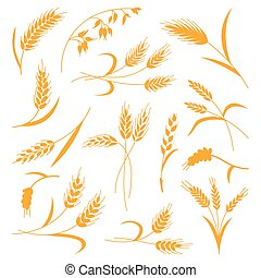 Set of spikelets of wheat on a white isolated background. Vector illustration. The icon