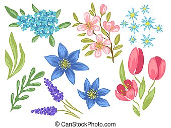 Set of spring flowers. Beautiful decorative natural plants.