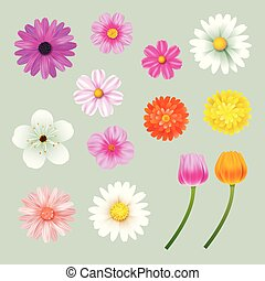 Set of spring flowers colorful isolated background.