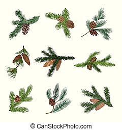 Set of spruce and pine branches with cones. Vector ...