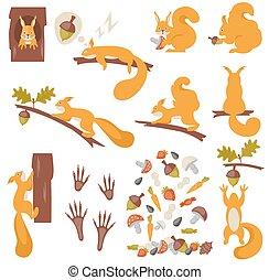 Set of squirrels cartoon. Squirrels.