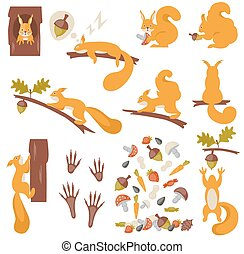Set of squirrels cartoon. Squirrels.