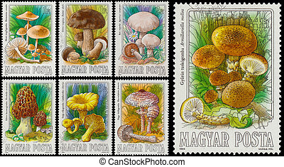 Set of stamps printed in Hungary shows edible mushrooms -...