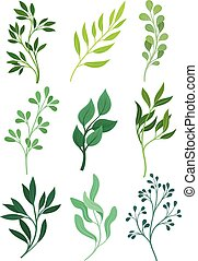 Set of stems with leaves. Vector illustration on white background.