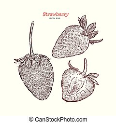 Set of strawberry. Vector hand drawn illustration