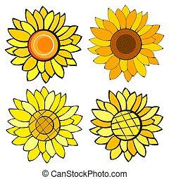 Set Of Sunflower Flower Isolated, Vector Illustration. Nature Background