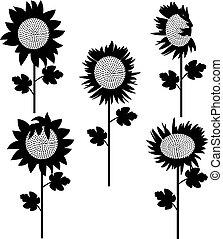 set of sunflowers silhouette 3