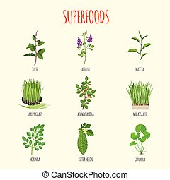 Set of superfoods in flat style. Healthy lifestyle. Herbs...