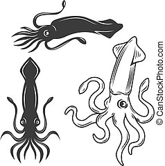 Set of the squid illustrations isolated on white background. Design elements for logo, label, emblem, sign, brand mark.