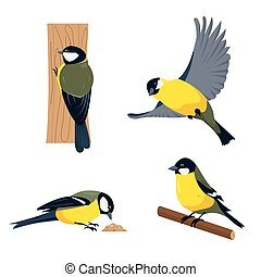 Set of tit birds in different poses