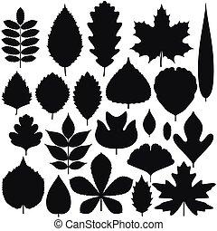 Set of tree leaves