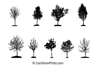Set of Tree Silhouette Isolated on White Backgorund. Vecrtor Ill