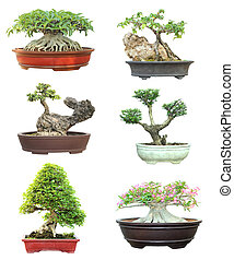 Set of trees in pots on white background