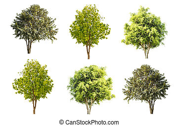 set of trees isolated on white background