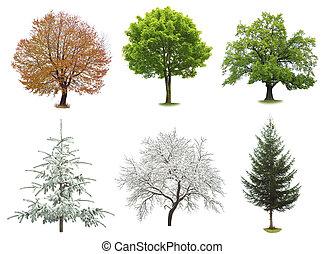 set of trees isolated on white background