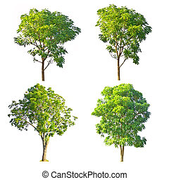 Set of trees on white background