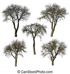 Set of trees without leaves.