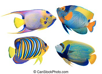 Set of tropical fishes on white